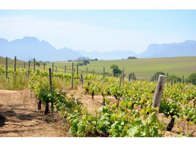 Stellenbosch property for sale. Ref No: 13274103. Picture no 16