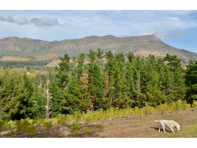 Stellenbosch property for sale. Ref No: 13269564. Picture no 7