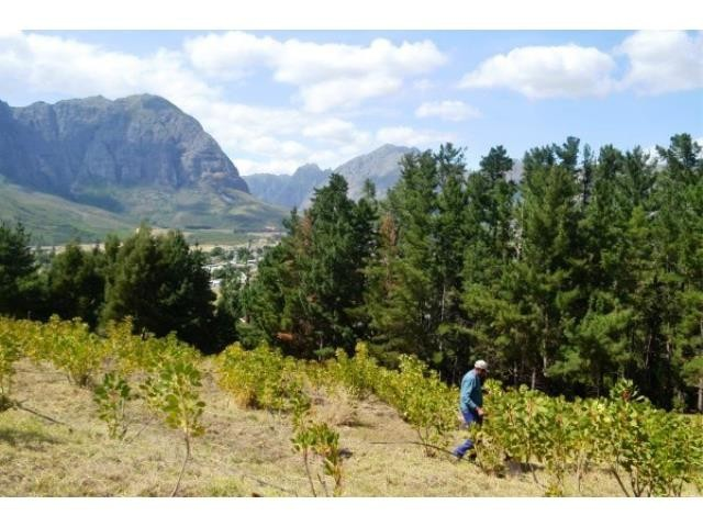 Stellenbosch property for sale. Ref No: 13269564. Picture no 21