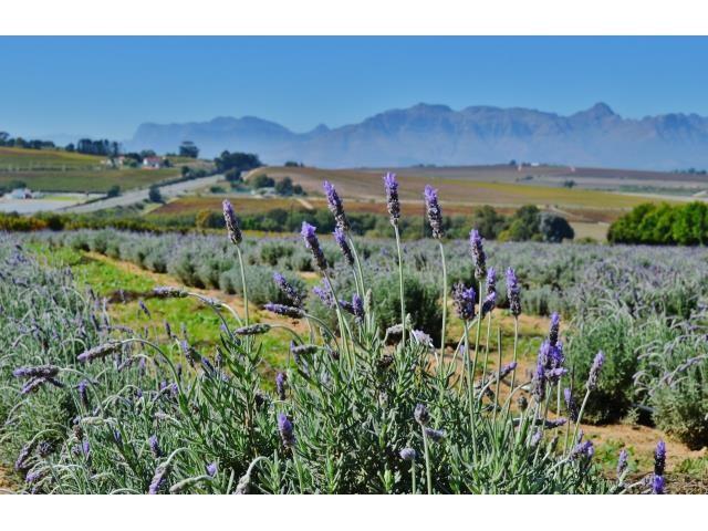 Stellenbosch property for sale. Ref No: 13269460. Picture no 2