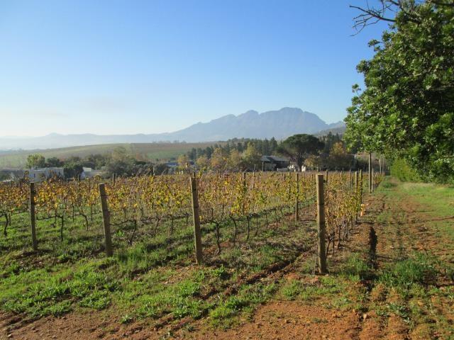 Stellenbosch property for sale. Ref No: 13374563. Picture no 17