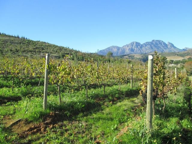 Stellenbosch property for sale. Ref No: 13374561. Picture no 11